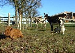 Les ânes et l'Highland dans les prés juxtant les gîtes.