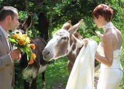 Un mariage réussi avec nos animaux.